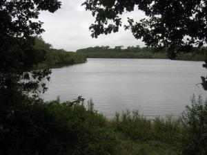 Sowley Pond