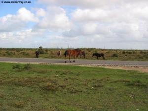 Ponies on the road